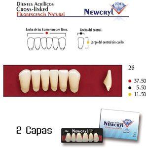 Dientes-Acrílicos-Newcryl-Vita-Inferiores-Color-A3-26-Newstetic-TienDental-material-odontológico