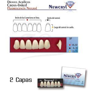 Dientes-Acrílicos-Newcryl-Vita-Superiores-Color-A3-3P-Newstetic-TienDental-material-odontológico