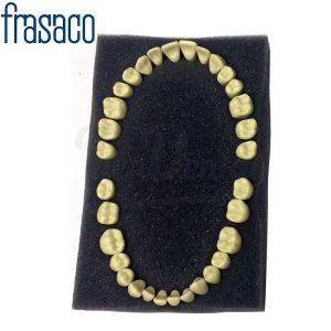 Juego-32-Dientes-para-Tipodonto-Frasaco-AG-3-TienDental-material-odontológico-estudiantes