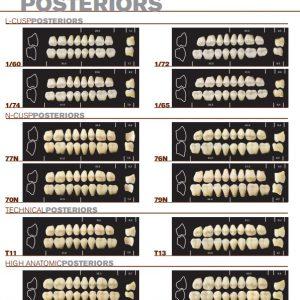 Major-Super-Lux-Dientes-Acrílicos-Posteriores-Tiendental-material-odontológico